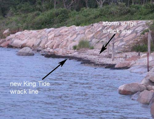 photo shows a new wrack line for the 2013 King Tide
